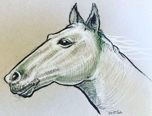 台北有質感的插畫課/Chester簡志嘉/解剖素描